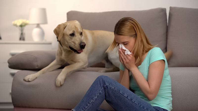 Easy Fixes to Keep Your Allergies Under Control